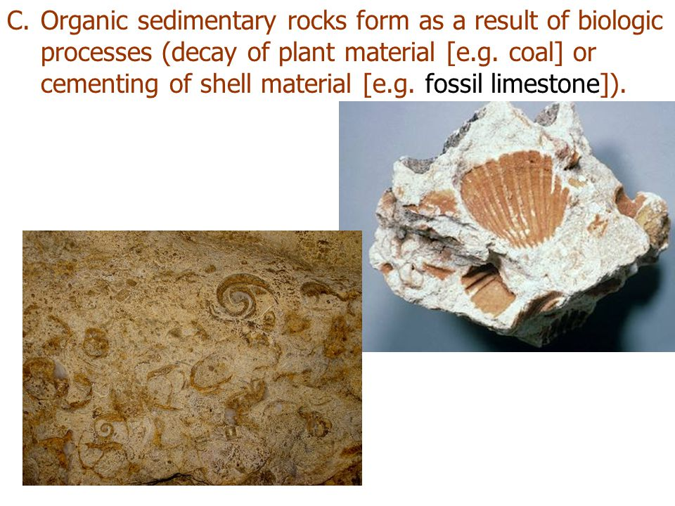 Organic sedimentary rocks form as a result of biologic processes (decay of plant material [e.g.